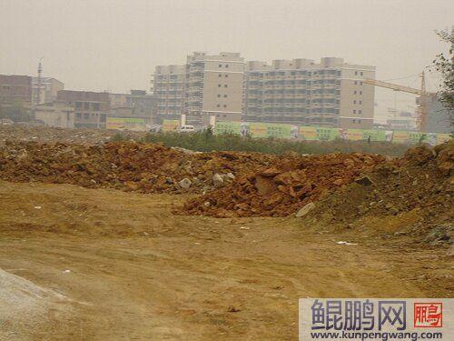 广西灵川县违法征地乱象调查